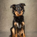 This border collie cross is a lively chap and would need a confident owner in his forever home.